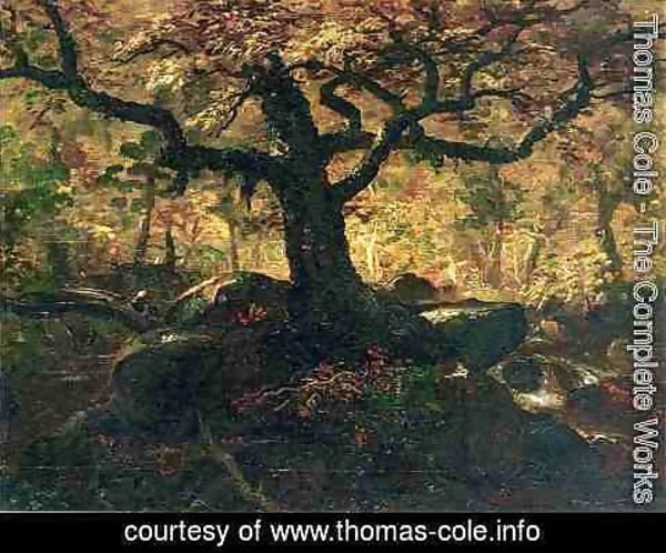 Thomas Cole - Tree in the Catskills